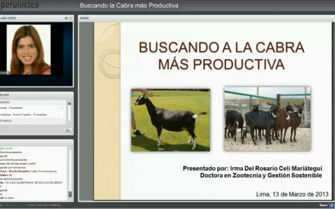 Buscando la cabra mas productiva