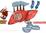 Metabolismo Hepático