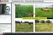 Video: Producción Bovina Sostenible