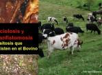 ganadería_cajamarca_