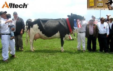 Alltech en la III Feria Holstein