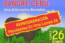 EN VIVO: Terneros con Sangre Cebú, Una Alternativa Rentable