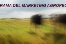 Panorama del Marketing Agropecuario