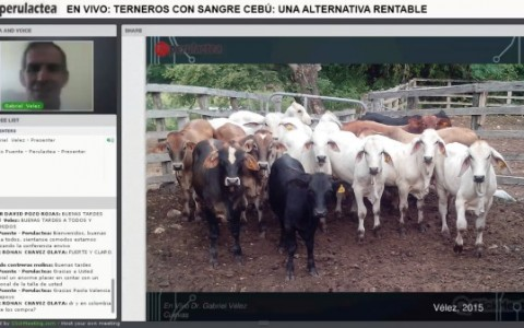 Perulactea En Vivo Teneros Cebu
