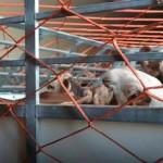Ecuador Importa 1.161 Bovinos de Alta Genética de Paraguay y Estados Unidos