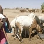 El Papel de la Leche y los Productos Lácteos en la Nutrición Humana