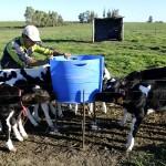 Alianza entre EEUU y Uruguay para Investigar la Paratuberculosis Bovina