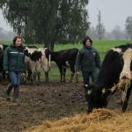 Chile Trabaja un Cuarto Embarque de Exportación de Vaquillas Vivas a China
