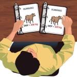 Aprenda a escoger el toro de raza lechera para la inseminación artificial en su rebaño