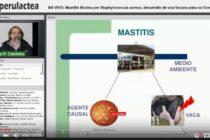 Videoclase: Una Vacuna contra la Mastitis Bovina por Staphylococcus aureus
