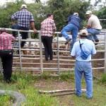 Ganaderos Panameños Realizaron Gira para Seleccionar Toros Reproductores