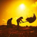 ¿Qué hacer cuando la población mundial se duplica pero no las tierra agrícolas?