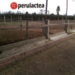 Ganadero Busca Socio Inversionista para Establo Lechero al sur de Lima