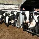 """Reportan un caso del """"Mal de las Vacas Locas"""" en el Reino Unido"""