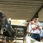 Carne Bovina Colombiana Apunta a Nuevos Mercados