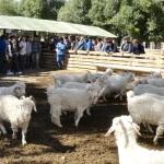 XXXIV Curso Internacional de Entrenamiento en Congelamiento de Semen y de Inseminación Artificial en Ovinos y Caprinos