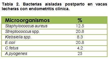 Bacterias aisladas postparto en vacas lecheras con endometritis clínica