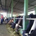 Honduras Firmó con Israel Acuerdo para Hacer Competitiva su Ganadería Lechera