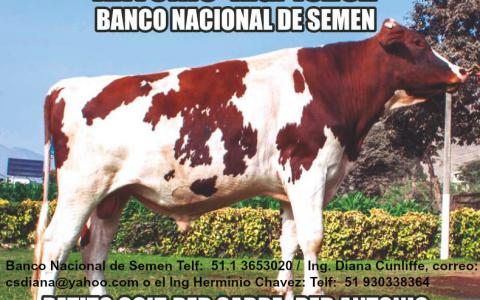 Antonio R.G.15262 Banco Nacional de Semene - ESTABLO LOS PATITOS