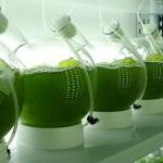 Investigación en Microalgas: Alimentación Animal y Muchas Oportunidades Más