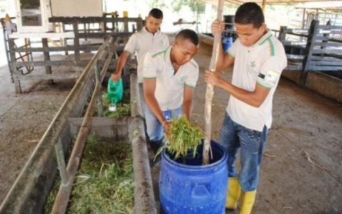 La melaza, el tamaño del pasto y un buen apisonamiento son indispensables para la fabricación de un excelente ensilaje.
