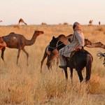 FAO: Hoja de Ruta para Combatir las Zoonosis Emergentes