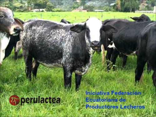 Federacion_Ecuatoriana_de_Productores_Lecheros_02