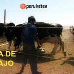 Empresa Purina Necesita Contratar 03 Promotores de Ventas