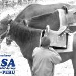 Detectan Foco de Encefalomielitis Equina Venezolana en Perú