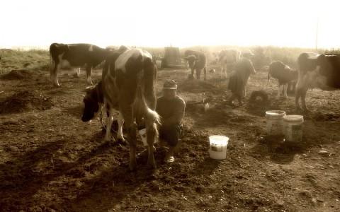 ganaderos_peruanos_en_crisis