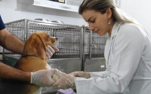 Alltech-Young-Scientist_salud_nutrición-animal_Manuela_Fischer-1024x768