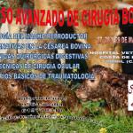 Curso Avanzado de Cirugía Bovina – España