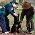 Enfrentando la Hidatidosis en el Sur del Perú