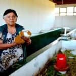 Perú: Líder en Investigación sobre Cuyes