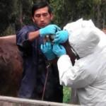 Perú trabaja para Mantenerse Libre de Fiebre Aftosa