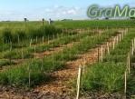 proyecto_ganaderia_sustentable