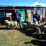 INIA Capacitó a 80 Criadores de Ovinos de Huánuco