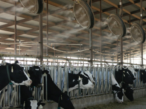 aspersores_agua_para_enfriar_vacas