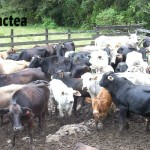 Senasa Inspeccionó Matadero en Distrito Oxapampino de Villarica
