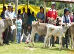 inseminacion_artificial_ganaderia_Cusco