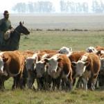Carne Uruguaya: Cuando la Trazabilidad del Ganado al 100% es Posible