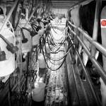 ADIL: Sector Lácteo Peruano Duplicó su Producción en Quince Años