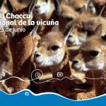 XXIII Chaccu Nacional de la Vicuña