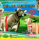 X Feria Ganadera de Exposición y Remate de Ganado para Camal y Reproducción – Expo C.C Llalli 2016
