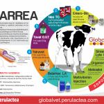 Tratamiento para Diarrea en Terneros (Infografía)
