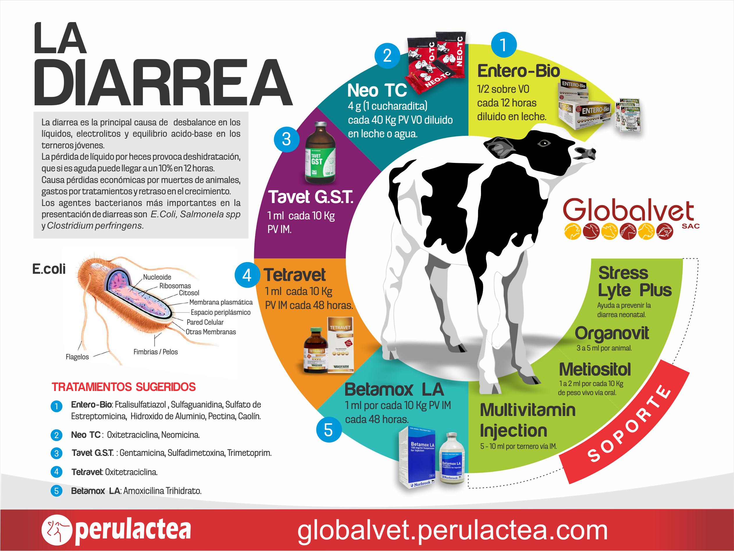 GLOBALVET-PRODUCTOS-VETERINARIOS-INFOGRAFIA-DIARREA-EN-TERNEROS