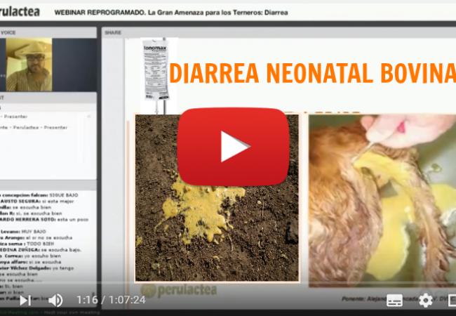 VIDEOCLASE ANDEANVET Diarrea La Gran Amenaza para los Terneros