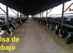 bolsa_de_trabajo_establos_lecheros