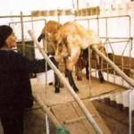 Producción Tecnificada de la Leche de Cabra