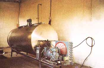 caprinos-tanque enfriamiento